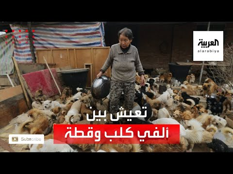 شاهد سيدة صينية تعيش مع 2700 كلب وقط في بيتها