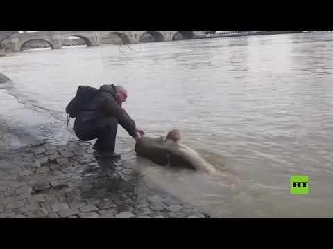 اصطياد سمكة عملاقة في نهر السين وسط باريس
