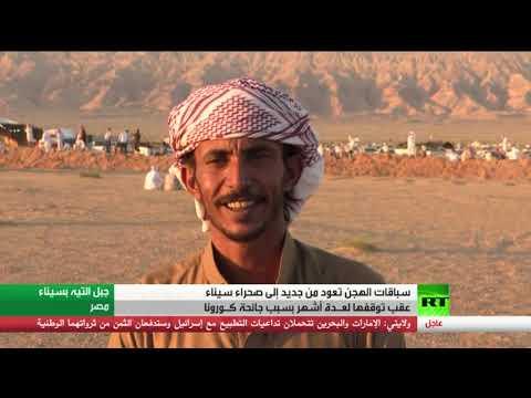 شاهد سباقات الهجن تعود من جديد إلى صحراء سيناء