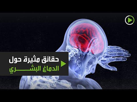 شاهد حقائق مثيرة حول الدماغ البشري أبرزها نسبة الماء في تكوينه