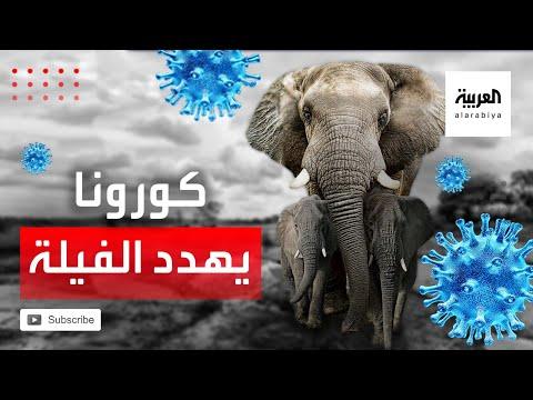 شاهد الفيلة المتقاعدة مصيرها مجهول في ظل كورونا