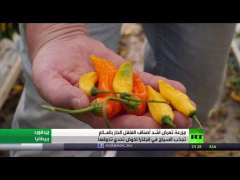 شاهد مزرعة تعرض أشد أصناف الفلفل الحار في العالم