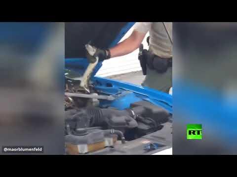 شاهد العثور على ثعبان عملاق اختبأ تحت غطاء محرك سيارة